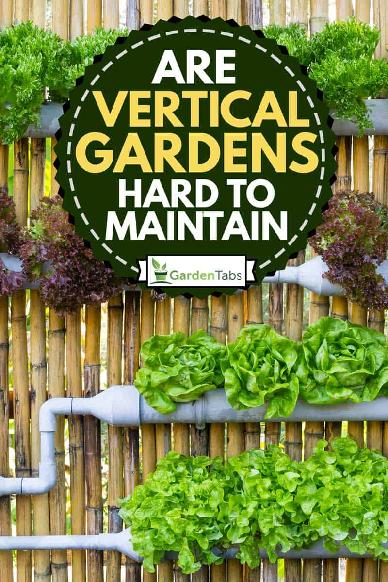Assorted vegetables in vertical gardening, Are vertical gardens hard to maintain