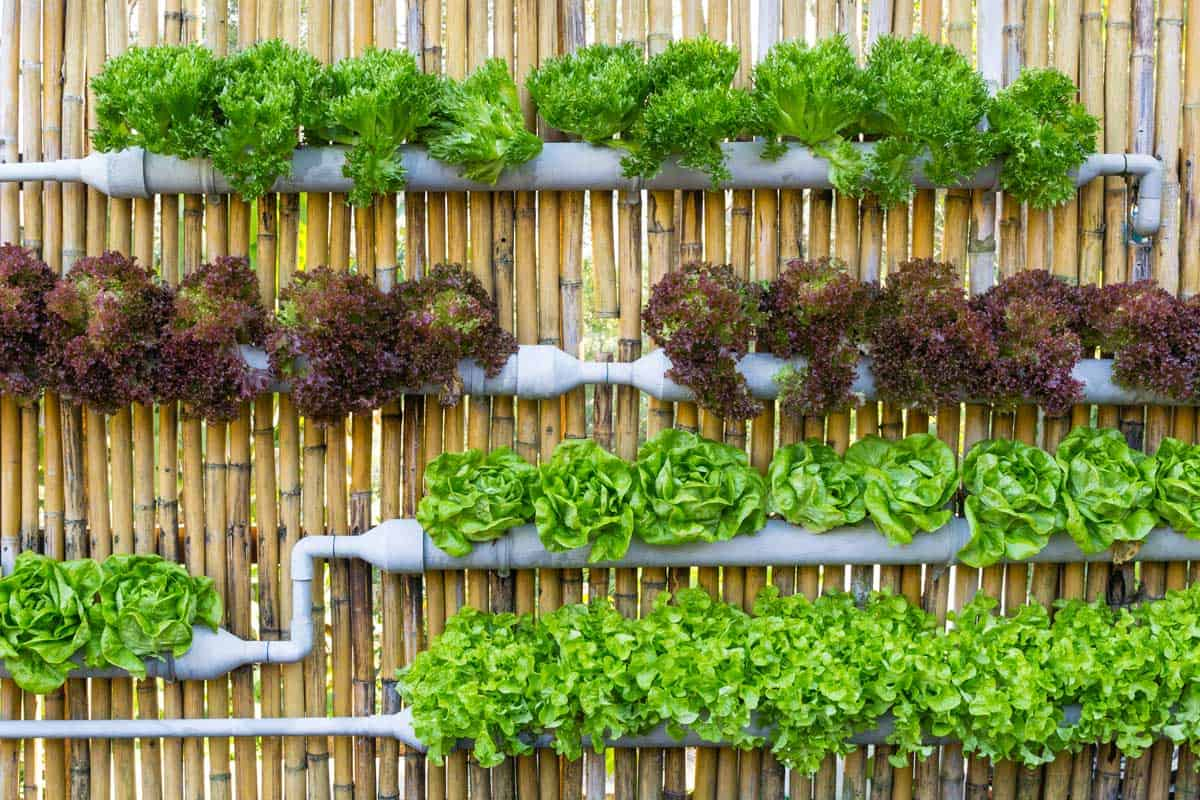 Assorted vegetables in vertical gardening