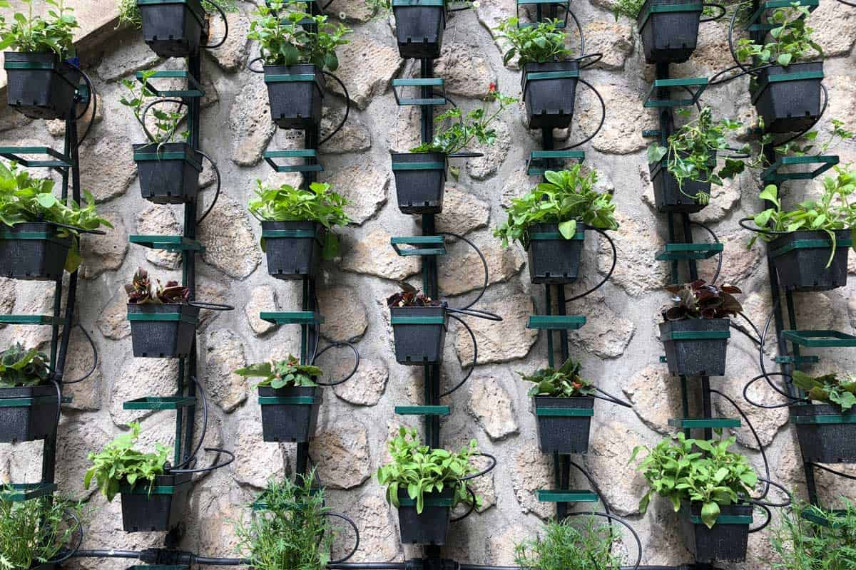 Vertical herb garden on concrete wall in Paris