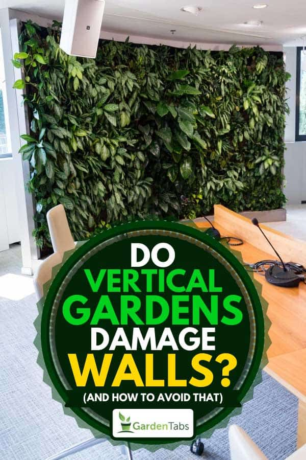 Vertical green wall in an office room, Do Vertical Gardens Damage Walls? (And How to Avoid That)