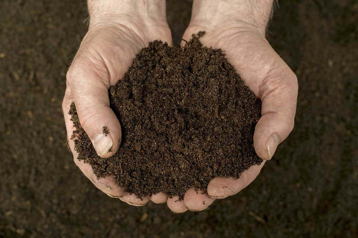 Person holding compost soil with both hands