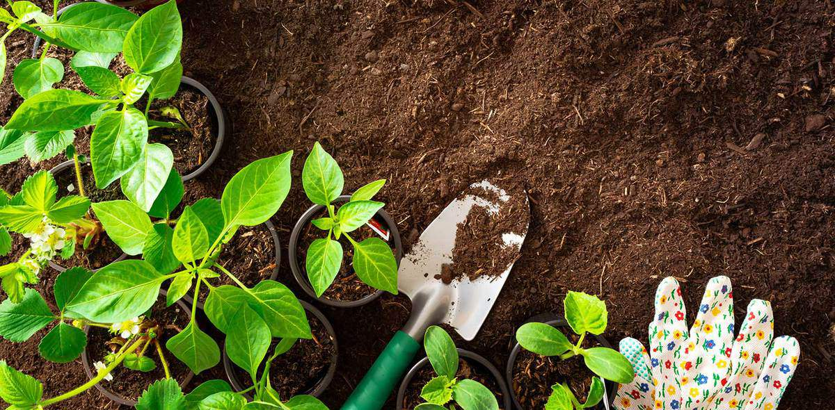 Top view of gardening tools and seedlings on soil