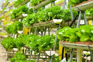Read more about the article Which Soil Is Best For Vertical Gardens?