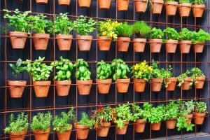 How to Easily Grow Food in Your Vertical Garden