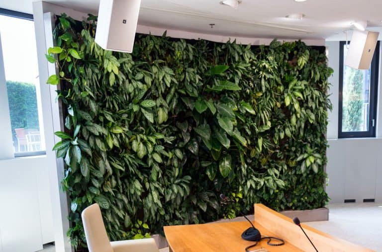 Do Vertical Gardens Damage Walls? (And How to Avoid That)