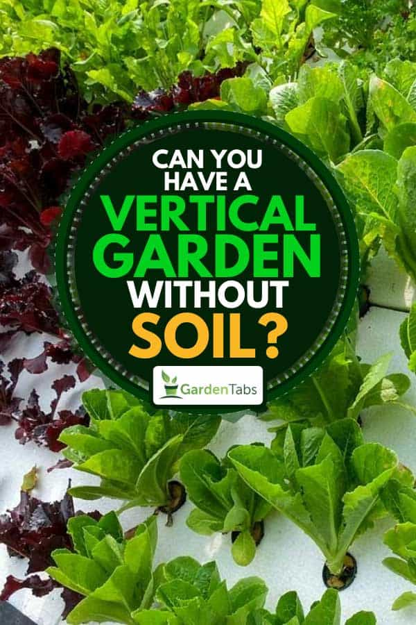 Growing lettuce on a vertical garden, Can You Have a Vertical Garden Without Soil?
