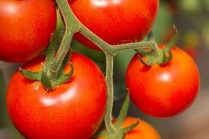 How to Grow Tomatoes in a Vertical Garden