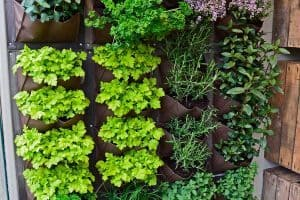 How to Make an Indoor Vertical Herb Garden