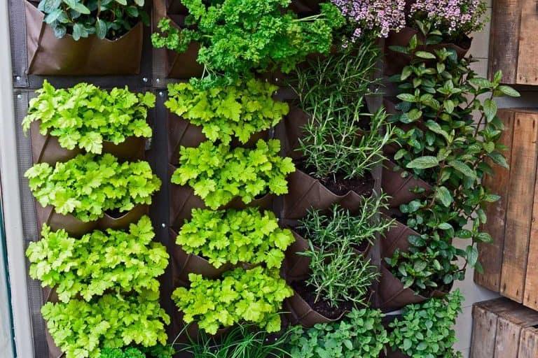 How to Make an Indoor Vertical Herb Garden