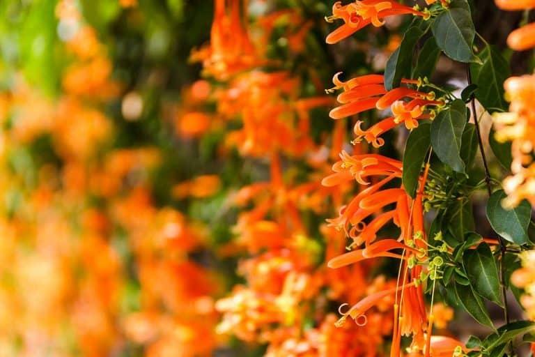 The 15 Best Perennials For a Vertical Garden