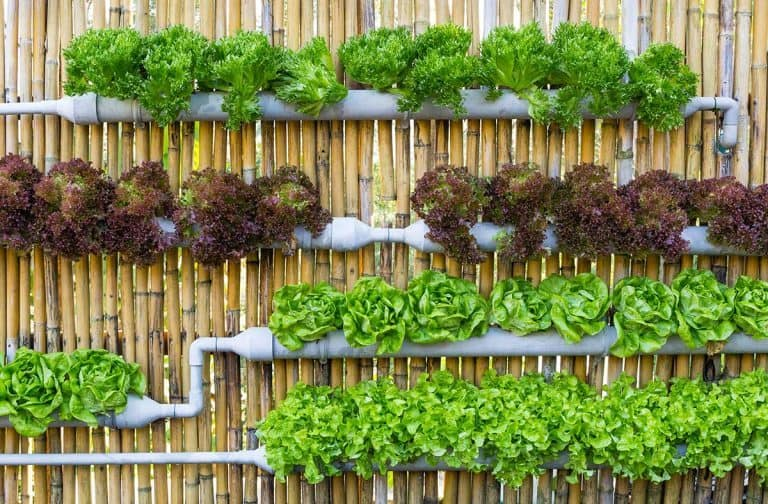 What Is Vertical Farming?