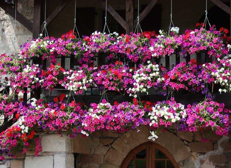 17 Best Flowers For Your Vertical Garden