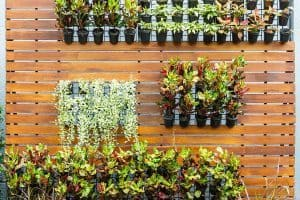 How to Build an Outdoor Vertical Garden
