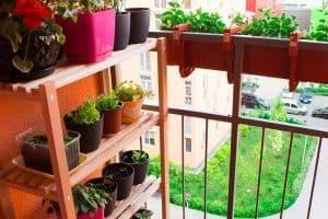 How to Make a Vertical Garden on a Balcony