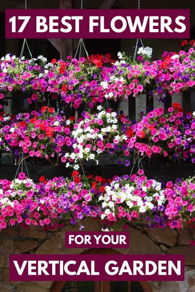 17 Best Flowers For Your Vertical Garden