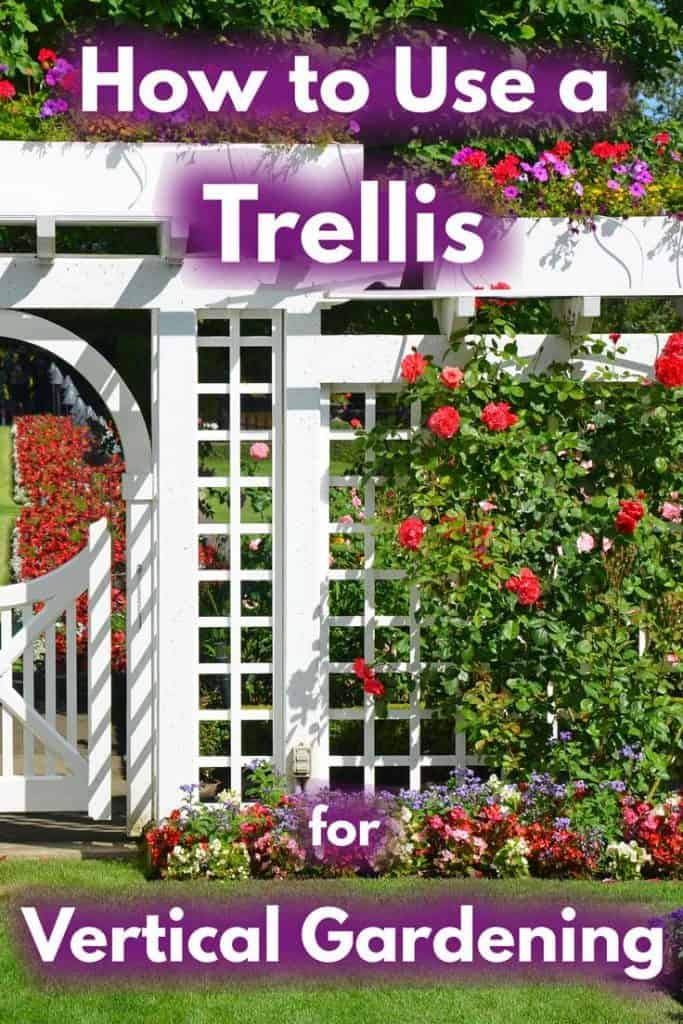 How to Use a Trellis for Vertical Gardening