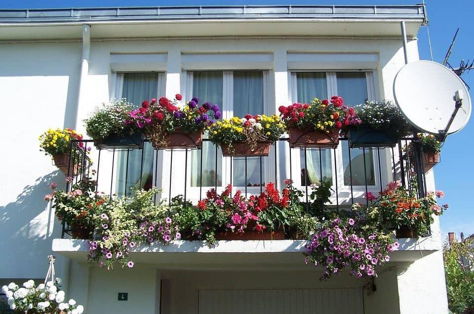 A bunch of flowers in pots in the Balcony