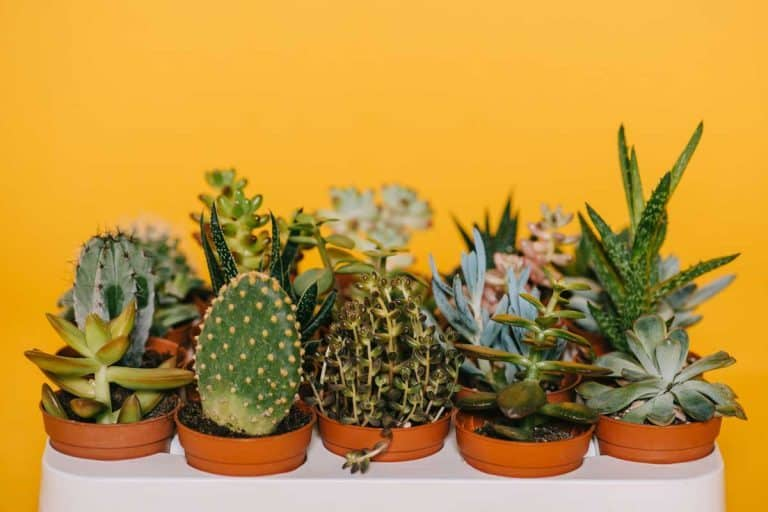 How to Make a Living Wall Using Succulents