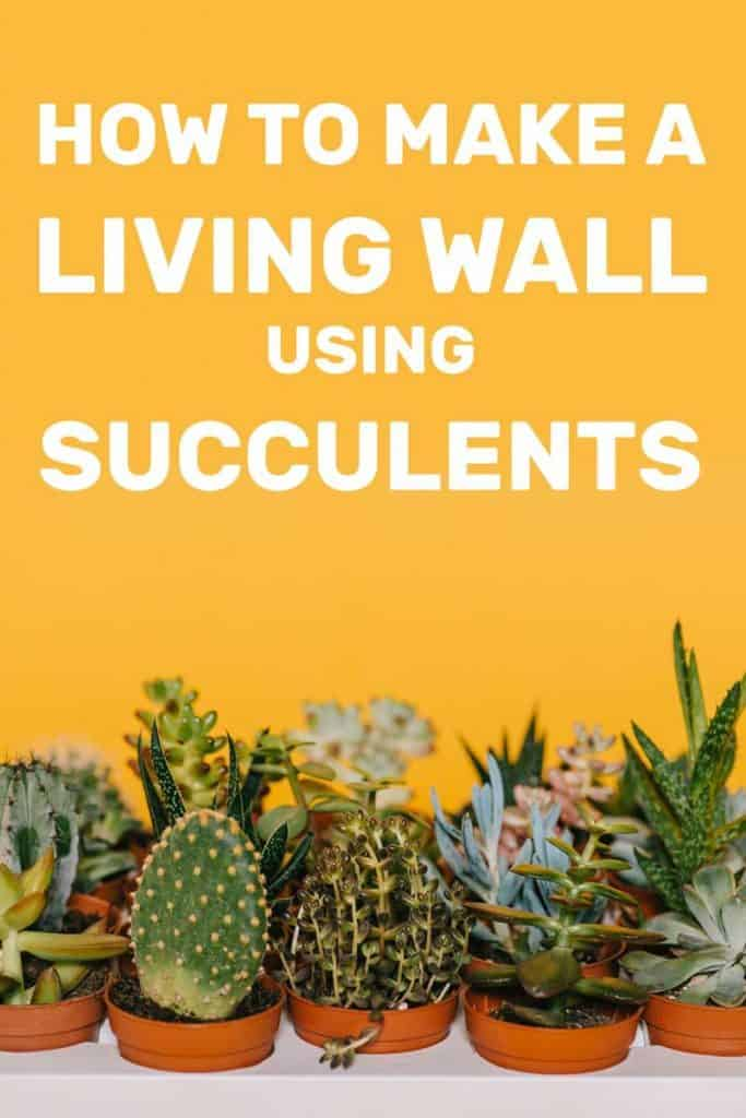 How To Make A Living Wall Using Succulents Garden Tabs