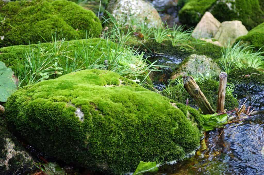 Moss Garden Ideas