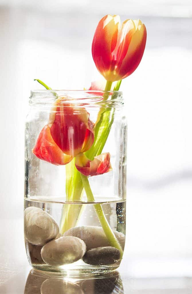Cut yellow and red Striped Tulips in the glass with water