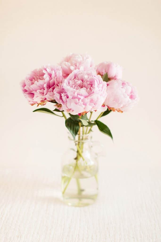 Bouquet of pink peonies placed on glass jar