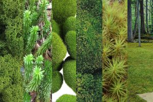12 Types of Moss That You Can Add to Your Garden