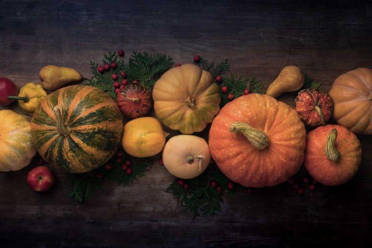 16 Weird Pumpkin Varieties (Pictures and Shopping Links)