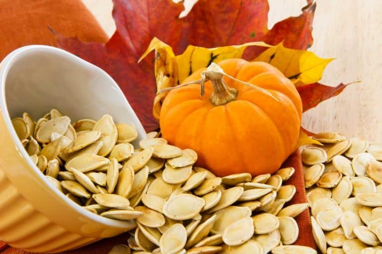 Top 50 Online Stores for Pumpkin and Squash Seeds