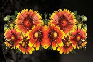 Read more about the article Which Drought-Tolerant Perennials Bloom All Summer?