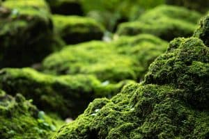 How to Grow Moss on Stone (Step-By-Step Guide)