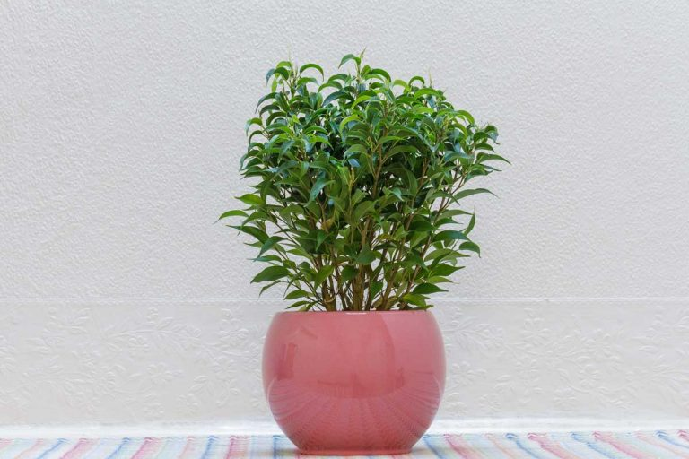 17 Extra Large Indoor Planters That Will Transform Your Home