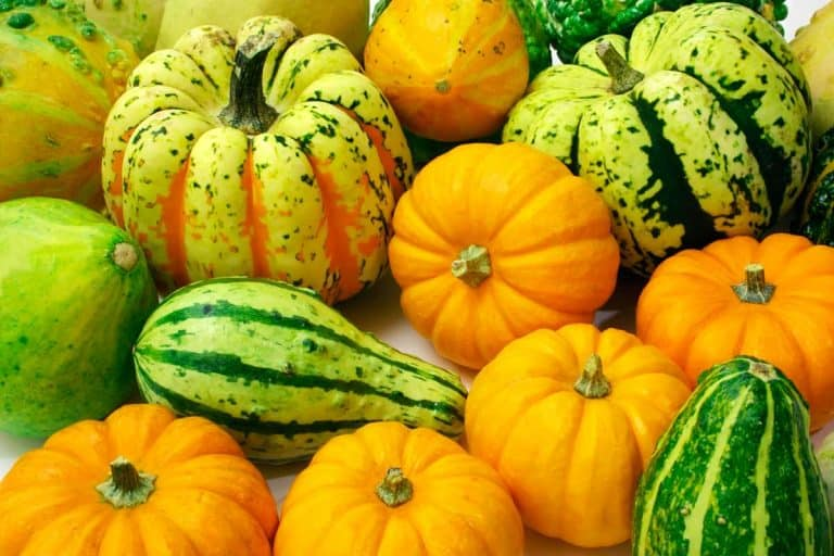 54 Types of Squash That You Can Grow in Your Garden