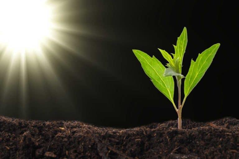 Do Plants Need UV Light?