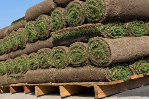 How To Create A Lawn With Kentucky Blue Grass Sod
