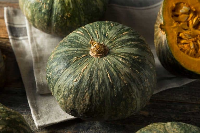 How to Grow Kabocha Squash (Tips, Images and Shopping Links)