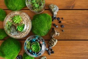 Read more about the article How To Grow Moss Indoors (Quick Guide For Beginners)