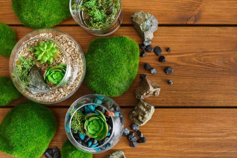 How to Grow Moss Indoors (Quick Guide for Beginners)