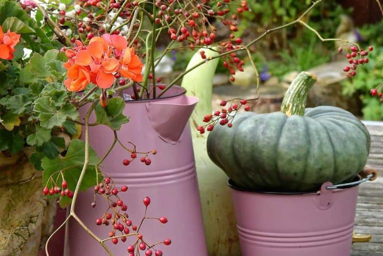 How to Grow Pumpkins in a Pot (Complete Guide)