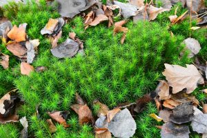 Read more about the article How To Grow Sphagnum Moss