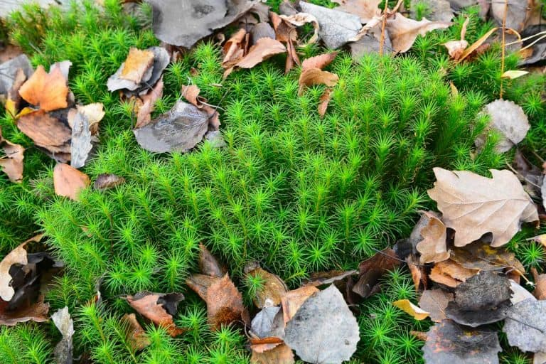 How to Grow Sphagnum Moss