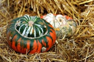 How to Grow Turban Squash