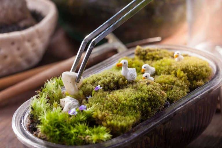 38 Fantastic Moss Terrarium Ideas You Can Have At Home