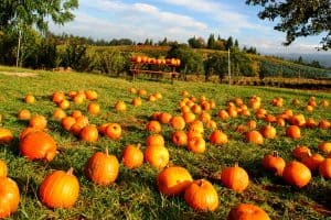 What Is A Pumpkin Patch?