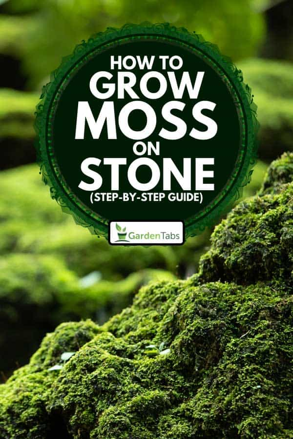 Bright green moss grown up cover the rough stones, How to Grow Moss on Stone (Step-By-Step Guide)