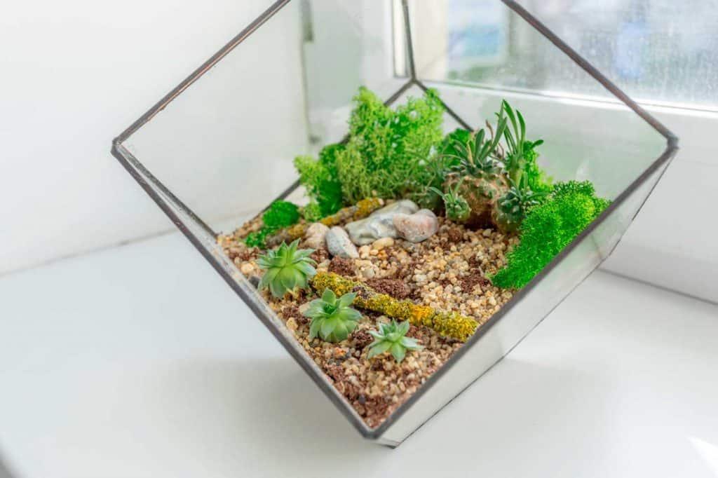 Mini succulent garden with moss in glass florarium