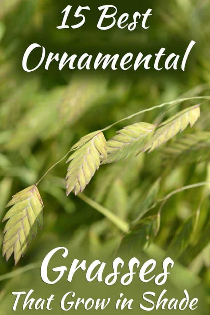 15 Best Ornamental Grasses That Grow in Shade