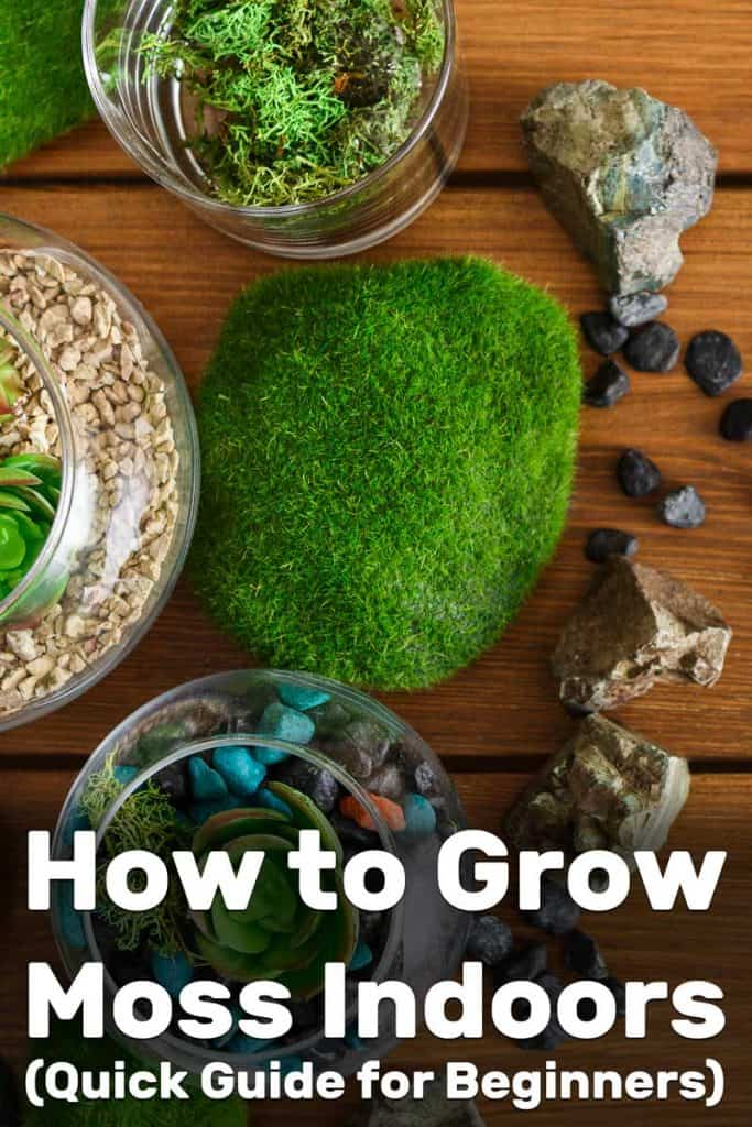 Lovely moss on rocks placed on a wooden table, How to Grow Moss Indoors (Quick Guide for Beginners)