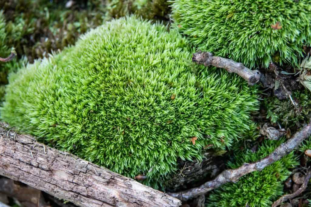 Does Moss Grow In The Sun Garden Tabs