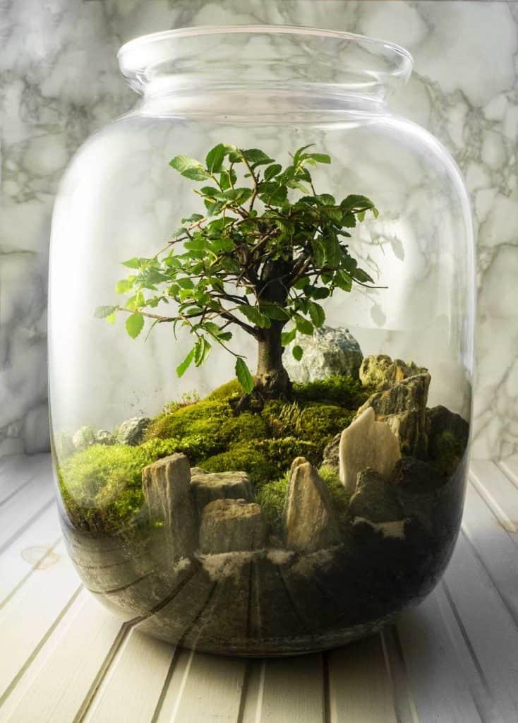 Stunning moss growing inside a jar